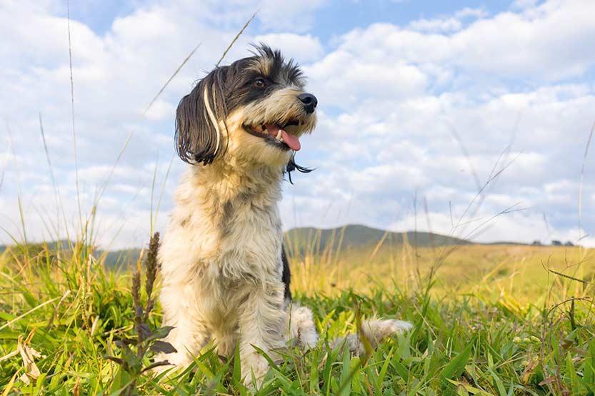 Hund im Urlaub