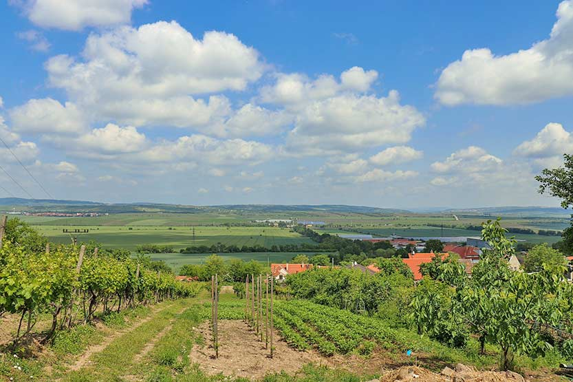 Weinanbau in Mähren